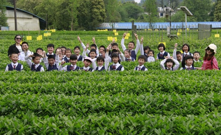 Sunny School Student Immersive Field Trip Local Tea Field