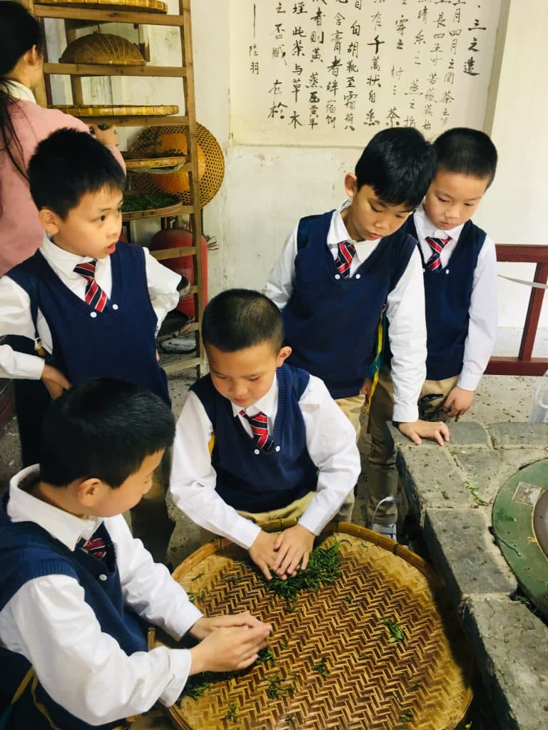 Sunny School Student Immersive Field Trip Processing Tea Leaves